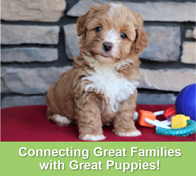 Testimonials & Reviews | My Home Puppies