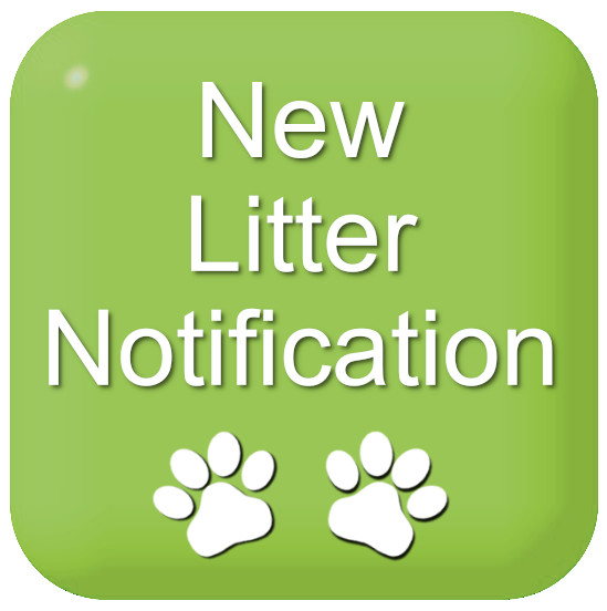 New Litter Notification